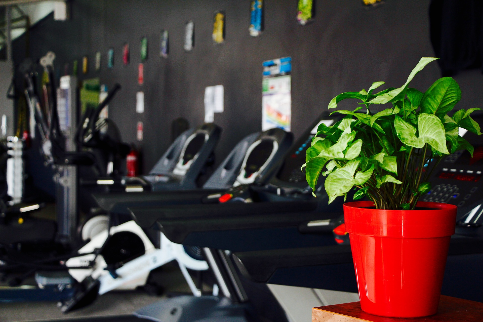 Mammut edzőterem, avagy a Lite Wellness Club - Edzoterem.info